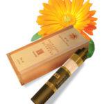 Sun-Brush-Box-Translucent